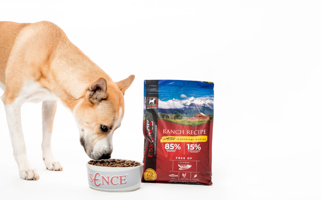 How to Introduce a New Pet Food Brand to Your Dog